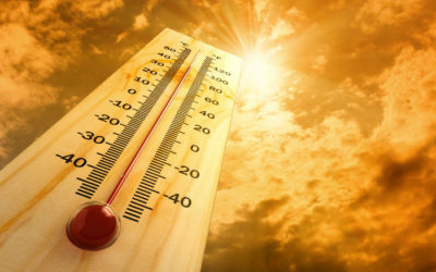Beating the Heat: Now's the Time for 'Water, Rest and Shade'
